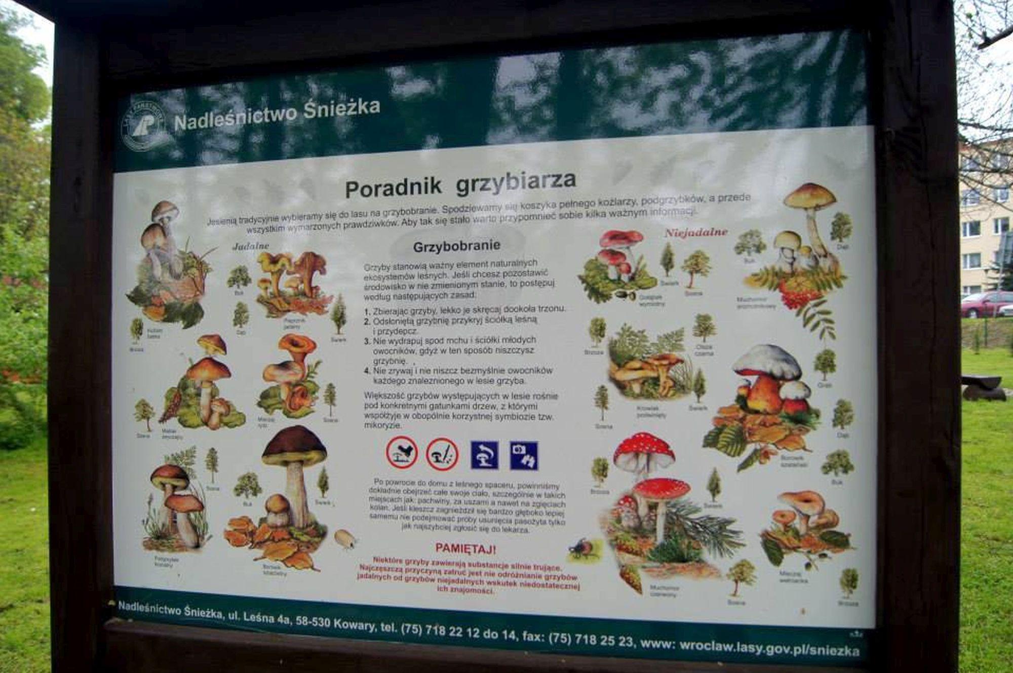 10. Park Nadleśnictwa Śnieżka w Kowarach
