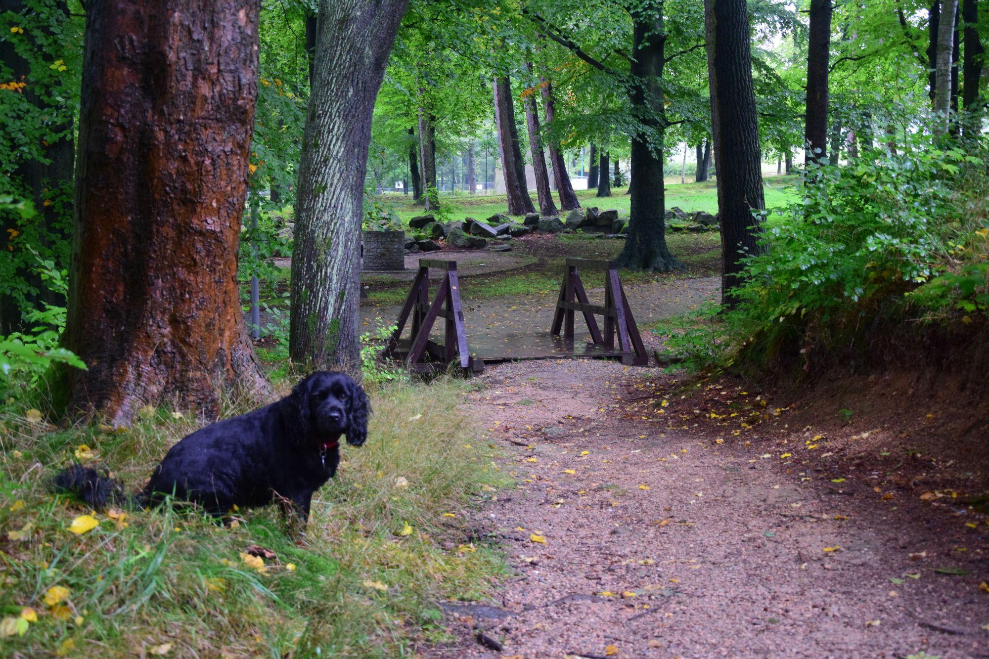 4. Leśny Park Miejski w Kowarach