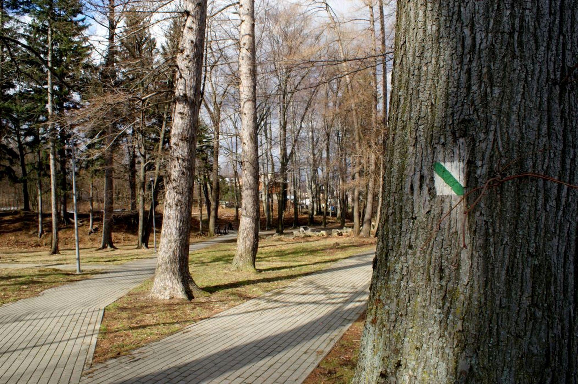 8. Leśny Park Miejski w Kowarach